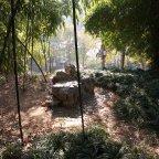 No Pandas Bears at The Black Bamboo Garden in Wuhan